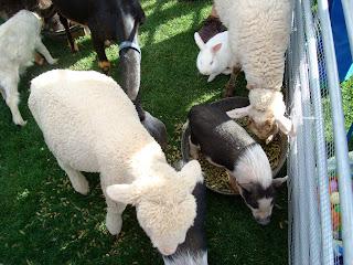 Various animals eating at petting zoo