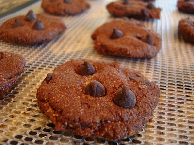 Raw Vegan Chocolate Chocolate-Chip Cookies on dehydrator tray