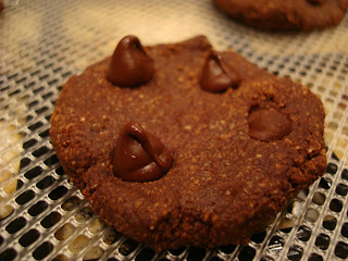 One Raw Vegan Chocolate Chocolate-Chip Cookie close up showing chocolate chips