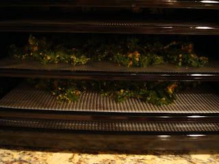 Kale leaves on dehydrator trays in dehydrator