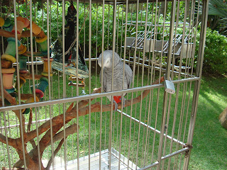 Grey bird in cage