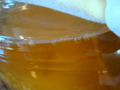 Homemade Kombucha in jar showing bubbles