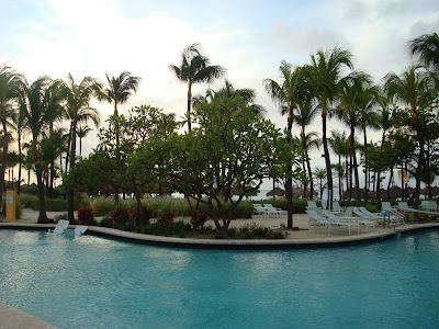 Pool surrounded by palm trees