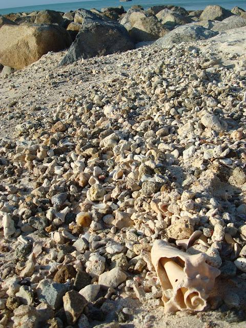 Lots of seashells on beach
