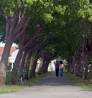 couple walking along path between two rows of trees
