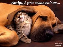 Ajude os animais