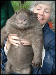Omigosh a wombat