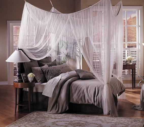 its my life i 39 ll do what i want canopy beds. Black Bedroom Furniture Sets. Home Design Ideas
