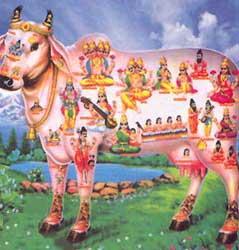 [cow1.jpg]