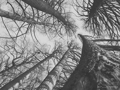 touching the sky bw