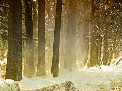 Iarna/Winter/Invierno/Inverno/Tél/Χειμώνα