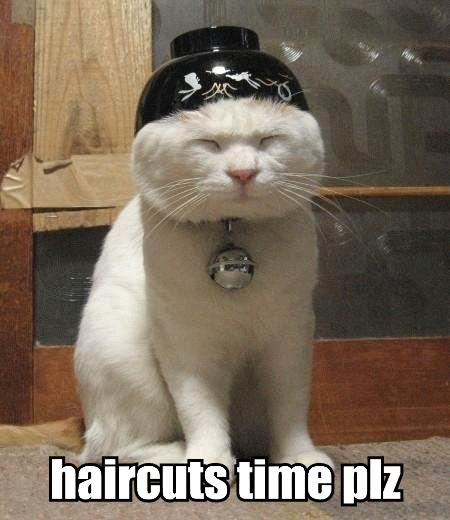 funny cat picture - funny cat pictures-LolCatHairCut