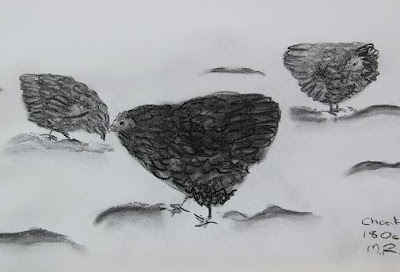 charcoal sketch of chickens