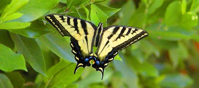 butterfly,swallowtail,beadyize,jewelry,earrings,necklace,bracelet,handcrafted,handmade