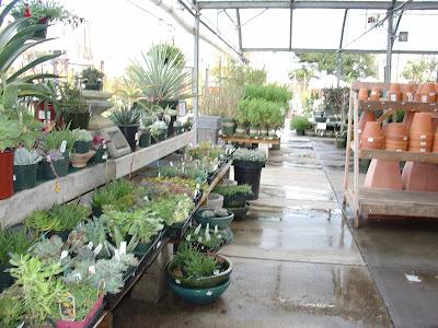 A Nursery At Cupertino Ca
