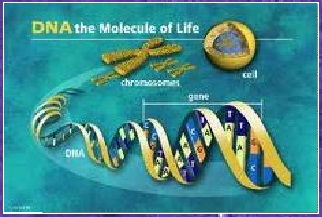 making a model of dna instructions
