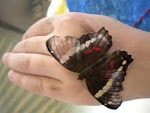 Butterfly on Soleine's hand