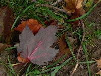 cape breton autumn leaves1 copyright kerry dexter