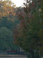 tallahassee autumn copyright kdexter