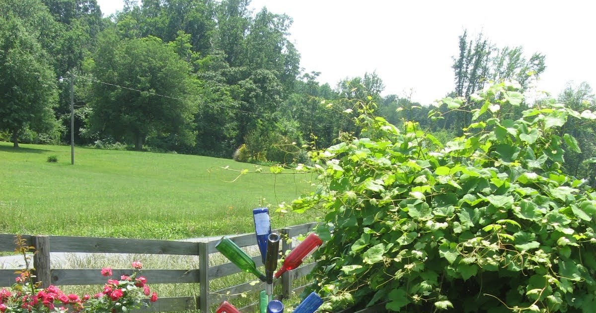 Welcome to Virginia Wine Country: Americas Hottest Wine