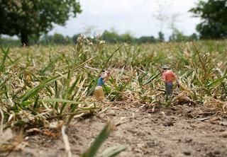 miniaturas en el campo