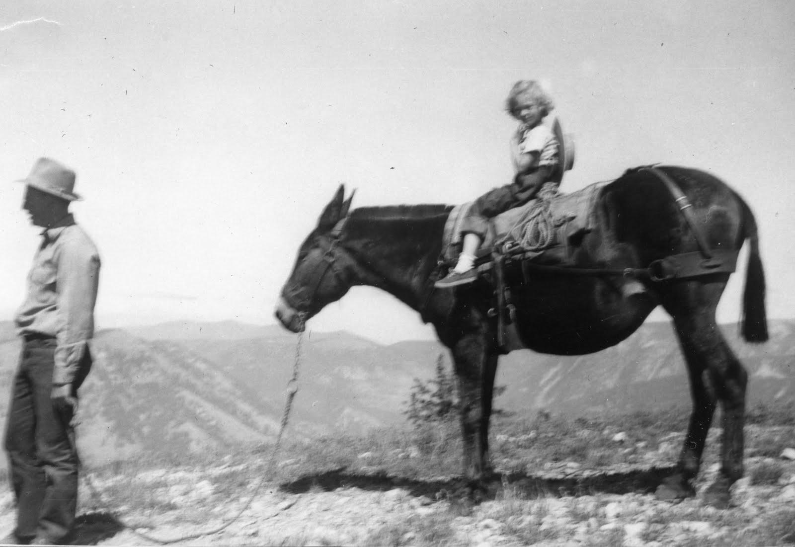 [Molly-pack+mule+1952001.jpg]