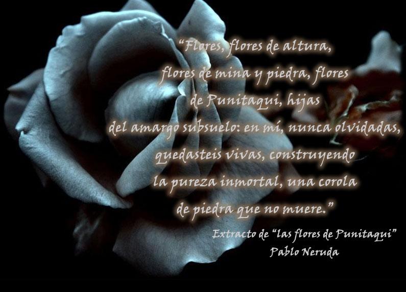 Poema para mi Hijo fallecido - Poemas de Amor Poesias y