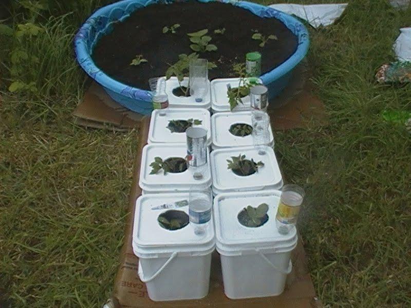 Robs World Mr Bigglesworth 39 S Kitty Litter Bucket Garden Bed