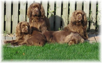 Puppy Care Center Sussex Spaniel Puppy Care Center And The Dog