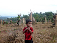 WHEN I CAME TO SEE RUBBER TREES