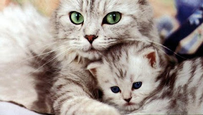 mother cat and her cute baby kitten