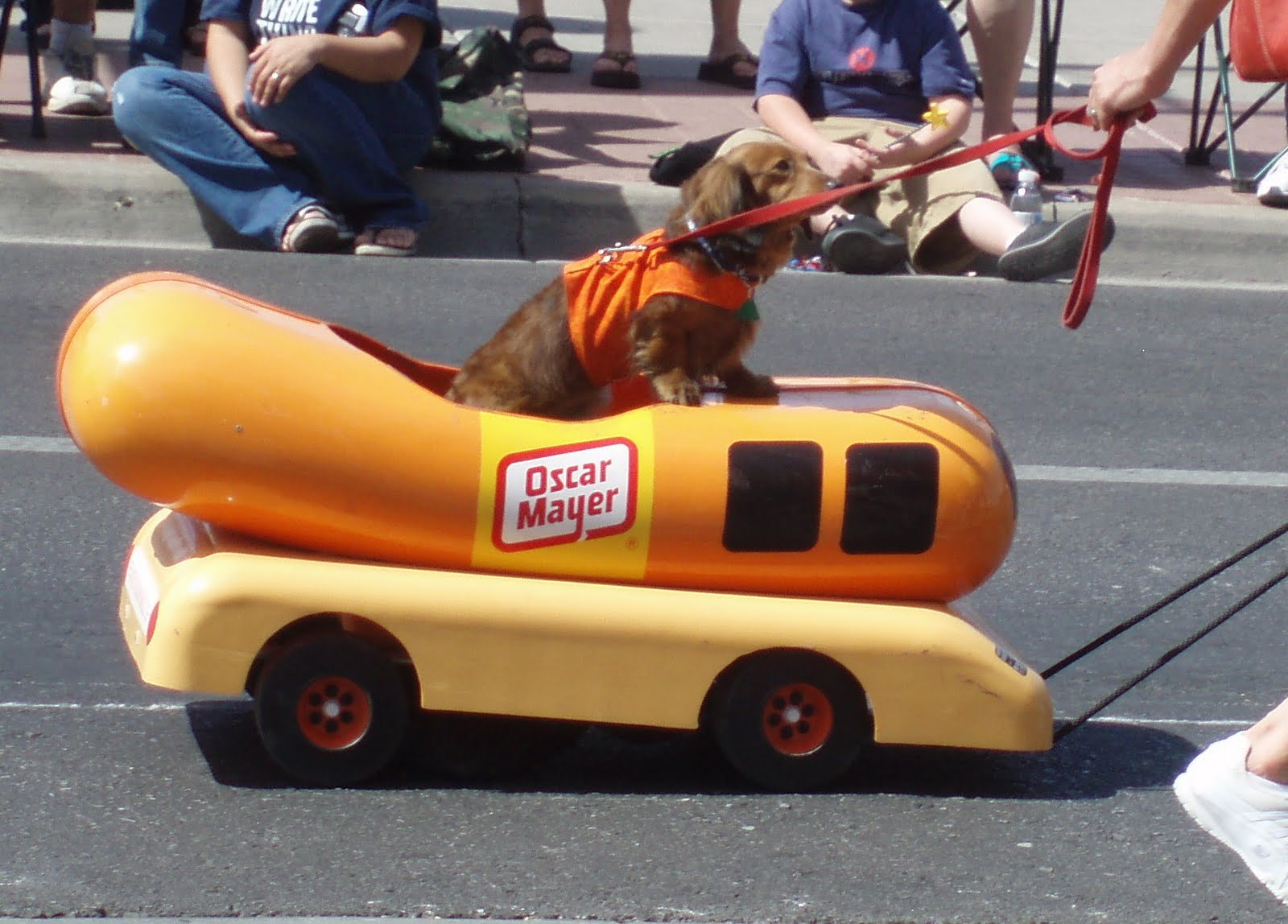 dog riding wiener mobile