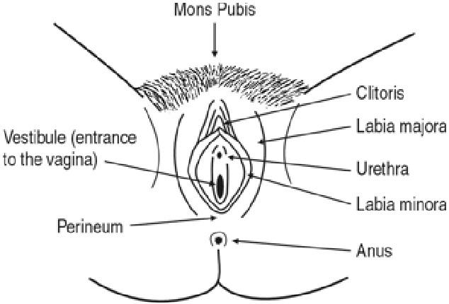 схема процесс секса