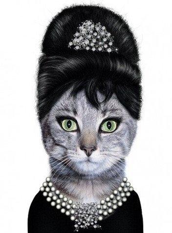 Audrey Hebpurn Cat