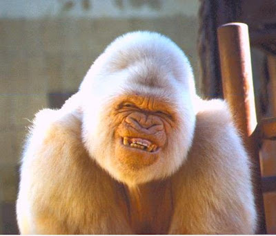 Ugly Gorilla Pics http://innovativespeedshop.com/20/big-ugly-gorilla