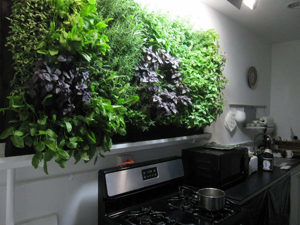 Hydroponic Herb Wall Is In JUNGLE WALLS