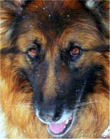 Sweet Olivia 1999-2012