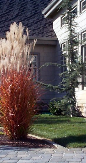 Hortist glory of ornamental grasses for Red landscaping grass