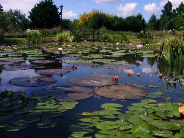 Jardiner a e imagen las disonancias de una laguna for Lagunas de jardin