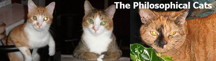 The Philosophical Cats