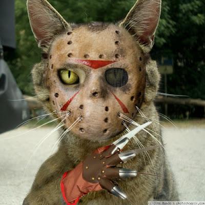 animalico XD Normal_bad_cat