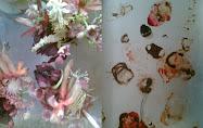flowerbeetroot