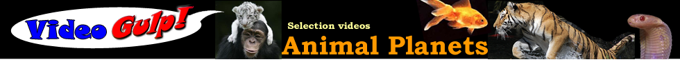 ANIMALS BEST VIDEO YOUTUBE VIDEOGULP