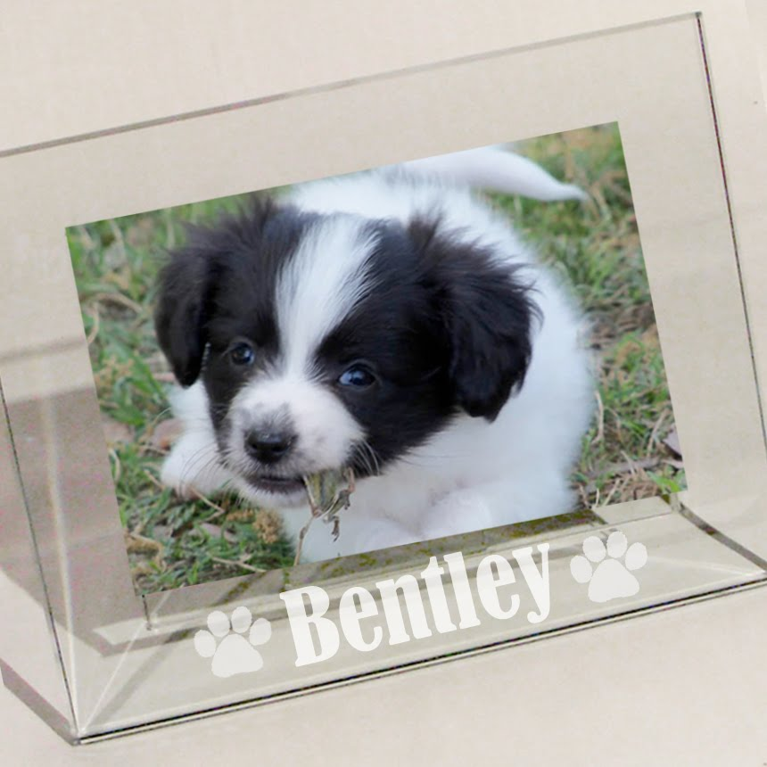 LuckyPups Blog: Personalized Dog Frames
