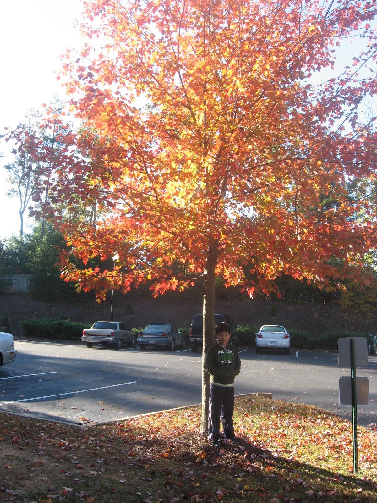 autumn is my favorite season essay Autumn: the best season of all essay autumn is the most wonderful season of all weather and monsoon season why summer is my favorite season.