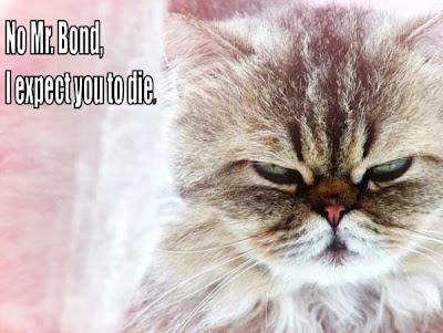 aggressive cat behavior