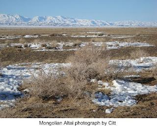 Mongolian habitat of snow leopard