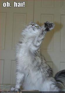 Polydactyl cat Tootsie