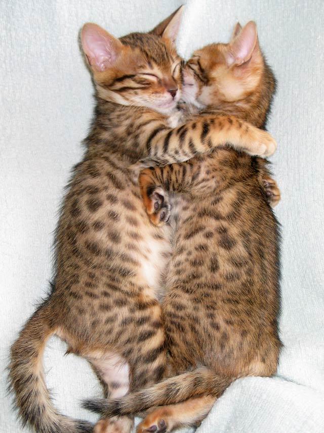 kitty hugs lol