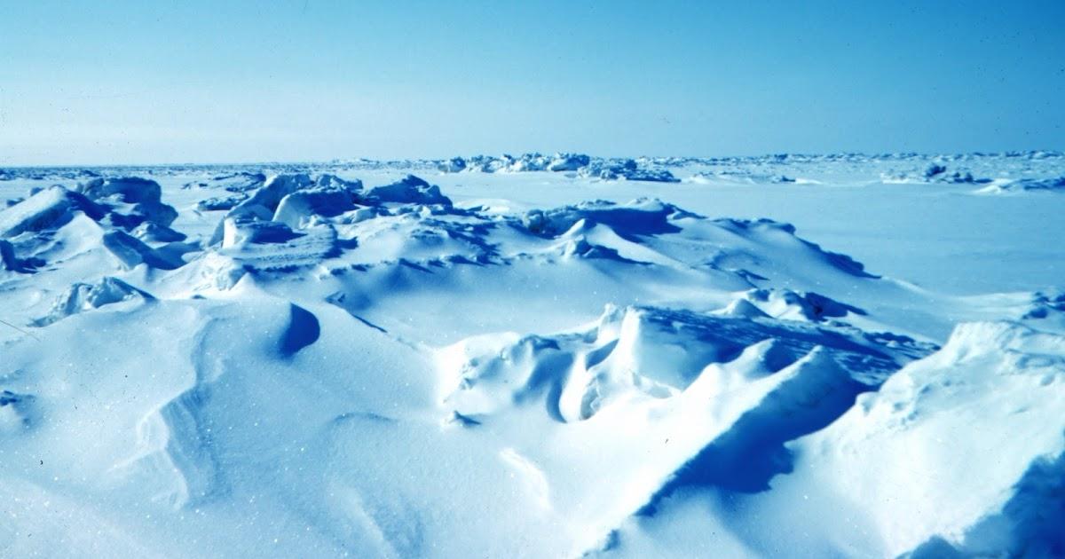iis  biomas bioma polar